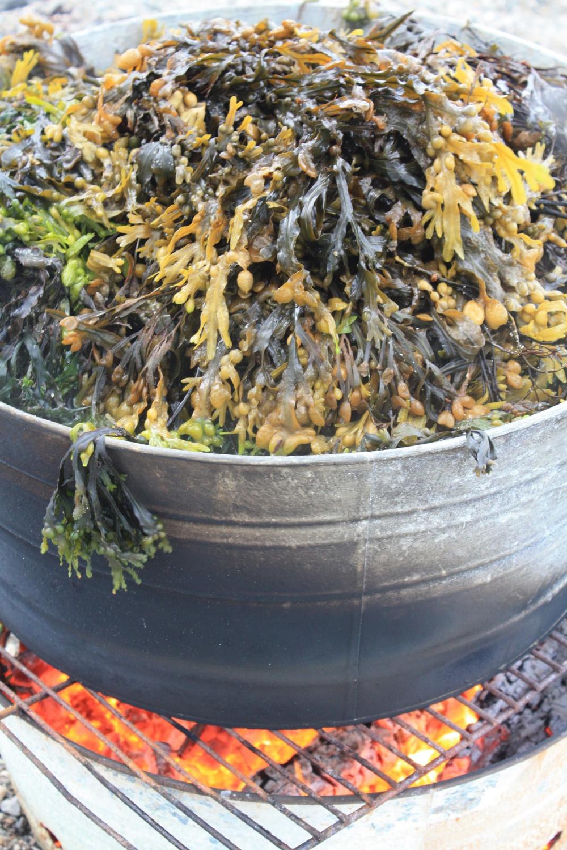 Seaweed Elizabeth Poisson