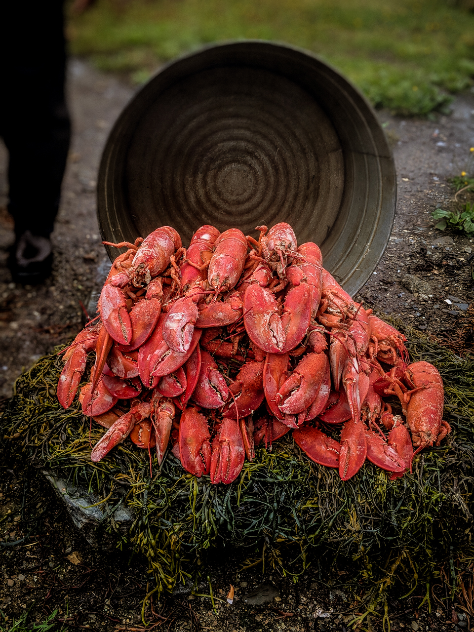Lobster Bake Photo by Shannon Shipman